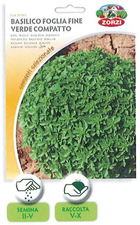Basilico foglia fine verde compatto