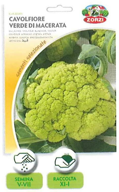 Cavolfiore verde di macerata