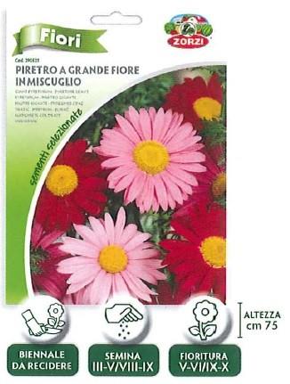FIORI - piretro a grande fiore