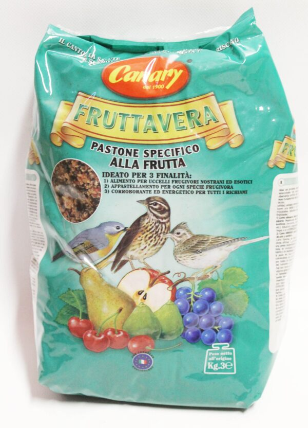 Canary Fruttavera uccelli granivori