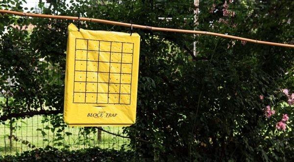 Block Trap - Trappola per cimici